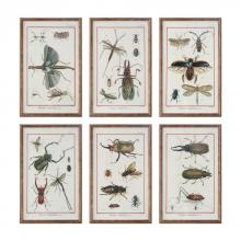 Uttermost 33628 - Uttermost Multi Insect Prints, S/6